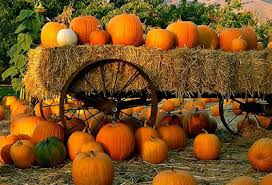 Five Places to Pick the Perfect Pumpkin on Cape Cod