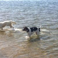 Top Dog Friendly Beaches in Massachusetts
