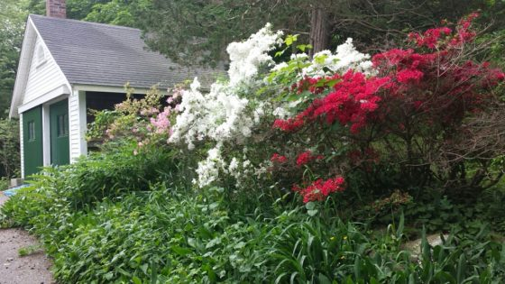 20180601_093819_Azaleas and garage resized (2)